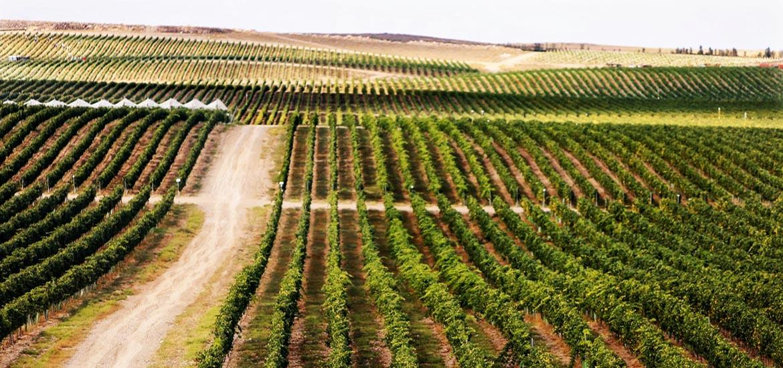 Tour to Karas Winery