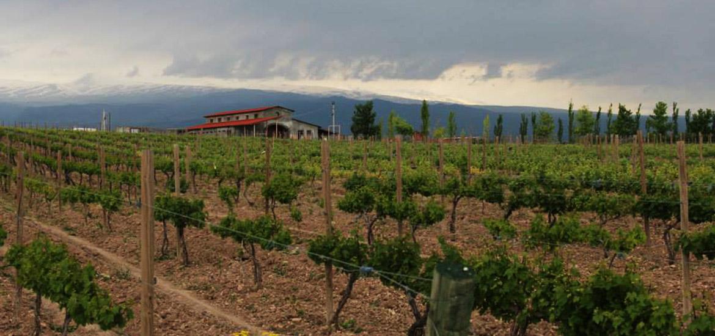 Tour to Voskevaz and Van Ardi Wineries
