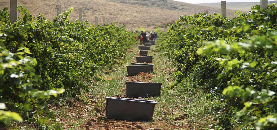 Tour to ArmAs and Armenia Wineries